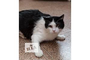 Метис мальчик Кот Франт из десанта 18 котов Соцгородка.