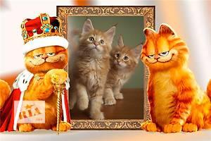 Мейн-куны котята