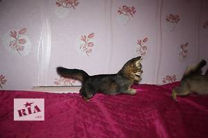 Объявления Кошки, коты, котята