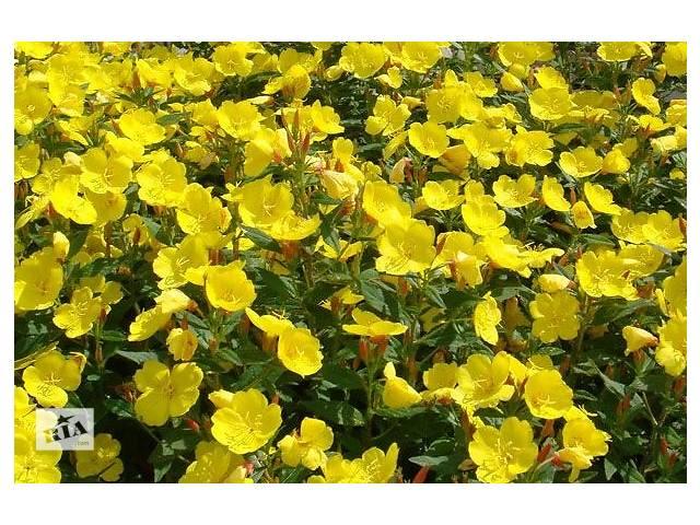 Цветы желтого цвета многолетние