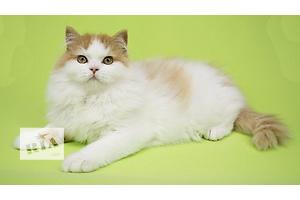 бу Кошки, коты, котята в Луганске Вся Украина
