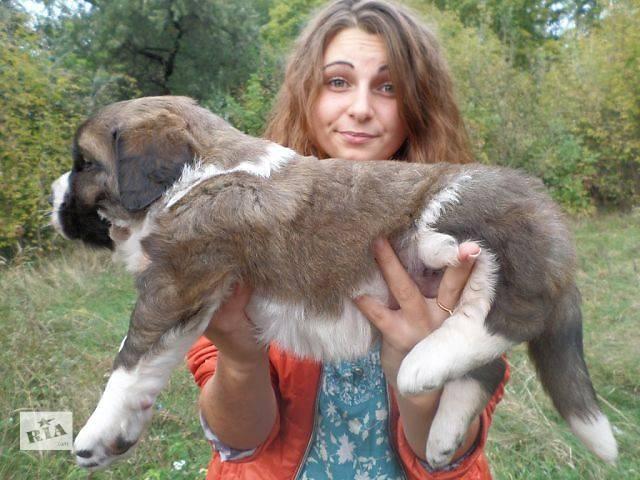 Московская сторожевая девочка- объявление о продаже  в Кременчуге