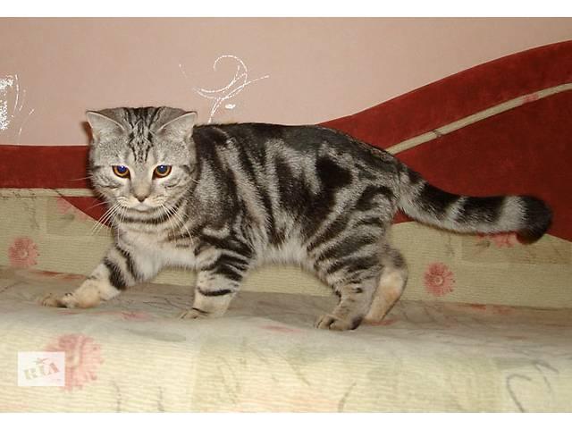 """продам Мраморный котик как в рекламе """"ВИСКАС"""" бу в Запорожье"""