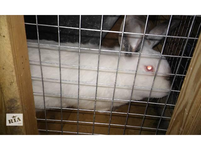 купить бу мясо кролика в Ужгороде