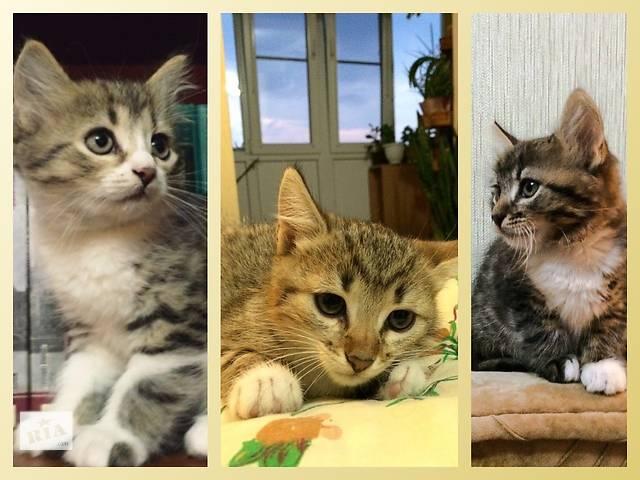 бу милые котята в добрые руки в Хмельницком