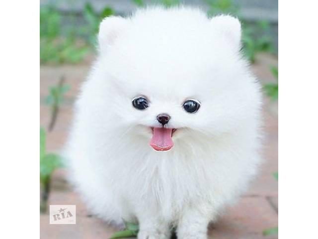 купить бу милые щенки померанского в Золотоноше