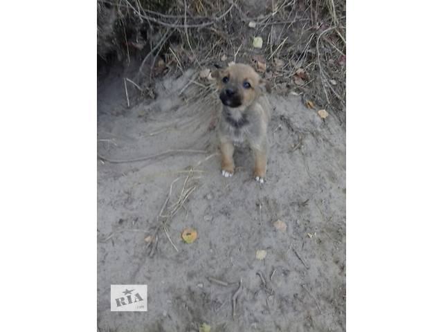 купить бу Милые щенята ищут своего хозяина в Житомире