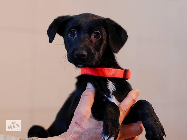 бу Мими, трехмесячный щенок девочка, небольшого размера. в Киеве