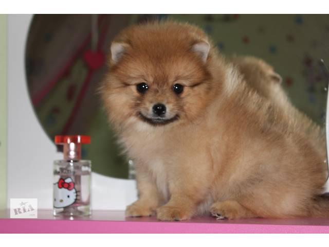 Очаровательный миниатюрный мальчик  из питомника!- объявление о продаже  в Бахмуте (Артемовске)