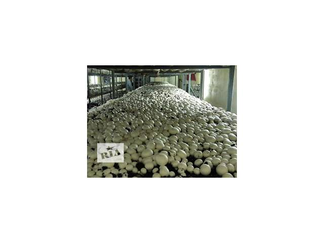 бу На работу требуются сборщицы грибов в Тернополе