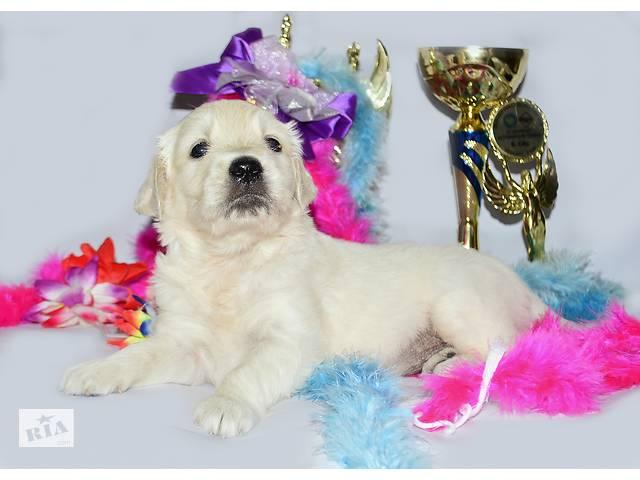 На сайте + видео! Идеальная собака для всей семьи, щенки золотистого ретривера от лучших производителей.- объявление о продаже  в Киеве