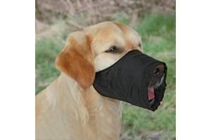 Ремни для собак