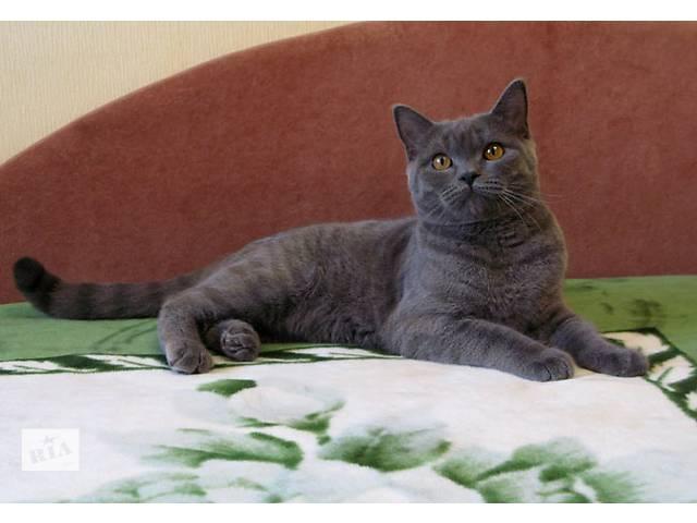 бу Нарядный плюшевый котик. Британский принц. в Киеве