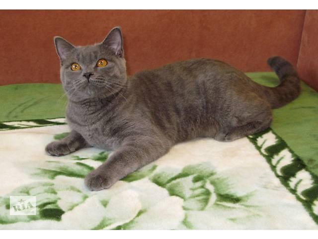 продам Нарядный плюшевый котик. Британский принц. бу в Киеве