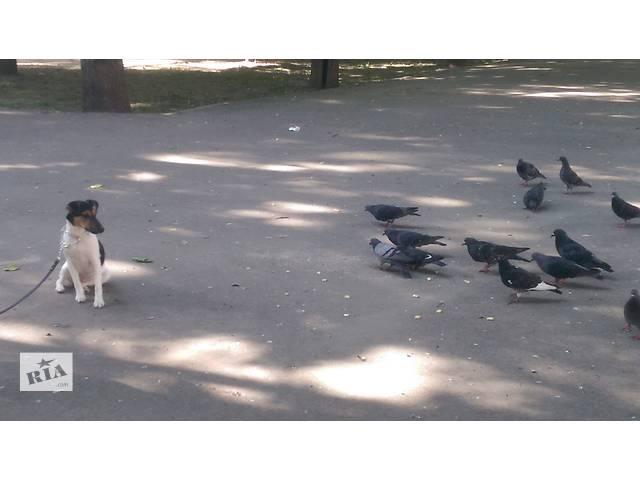 купить бу Натаска на охоту . Дрессировка собак в Одессе и Одесской области в Одесской области