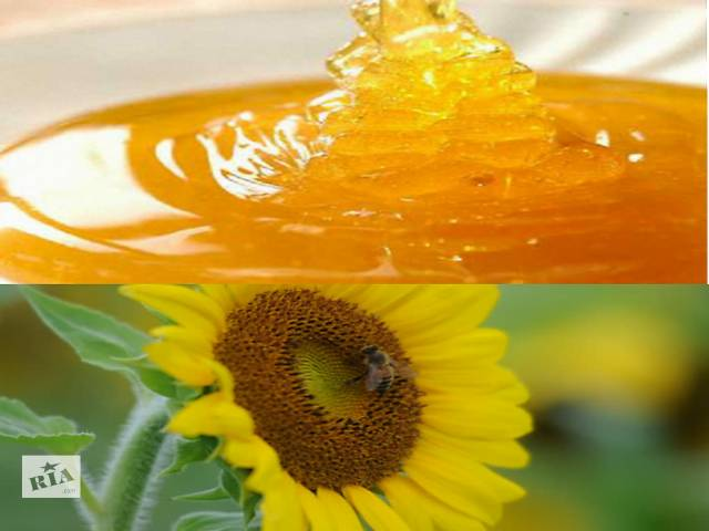 продам Натуральный Подсолнечный Мёд бу в Киеве