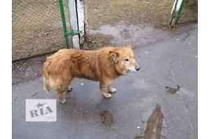 Найден пес в районе Барсского шоссе