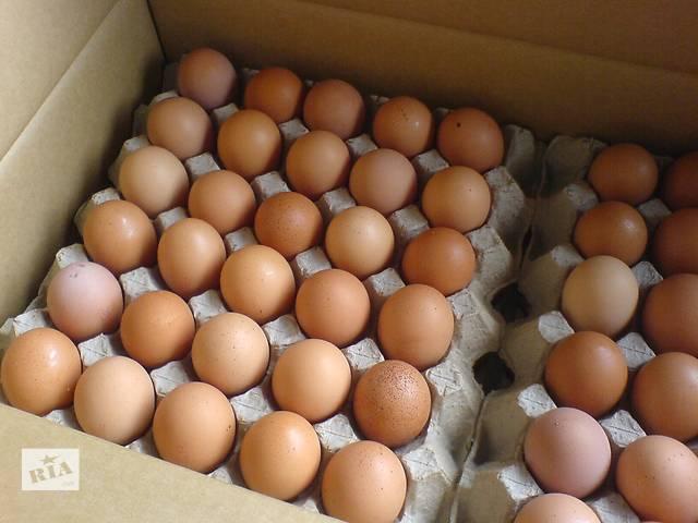 Недорого куриные яйца категории c-0 и с-1- объявление о продаже  в Киеве