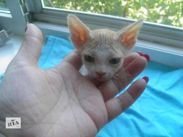 термобелье купить недорнедо котенка сфинска идеально
