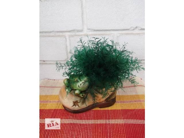 Нептунус - японские водоросли- объявление о продаже  в Львове