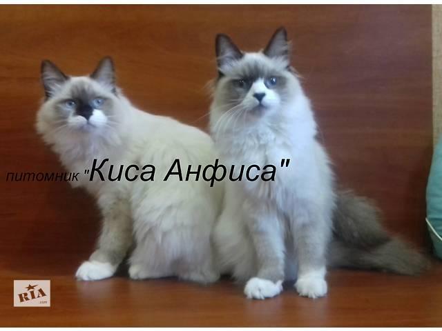 бу Невские маскарадные котята  в Полтаве