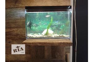 Новинка! !настольній аквариум с LED подсветкой  рибками 4-шт водорослями