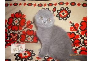 Ну дуже гарні кошенята