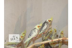 бу Птицы в Днепропетровске Вся Украина