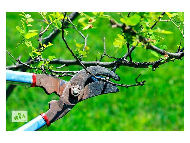 продам обрезка деревьев бу в Кривом Роге (Днепропетровской обл.)