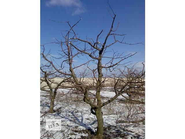 продам Обрезка плодовых деревьев,формирование кроны. бу  в Украине