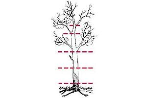 Обрезка сада, спил деревьев, выкорчевывание пней