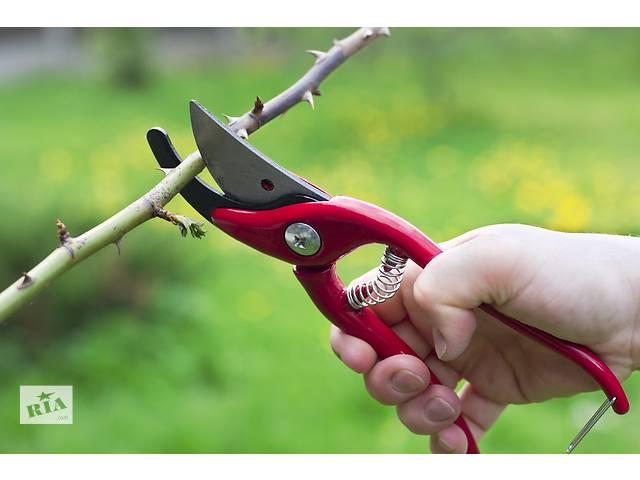 Обрезка сада, виноградников, спиливание деревьев- объявление о продаже  в Нежине
