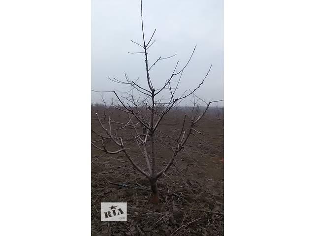 бу Обрезка садовых, фруктовых деревьев на плодоношение.Уход за деревьями в Никополе (Днепропетровской обл.)