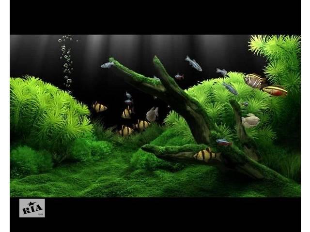 купить бу Обслуживание аквариума в Киеве