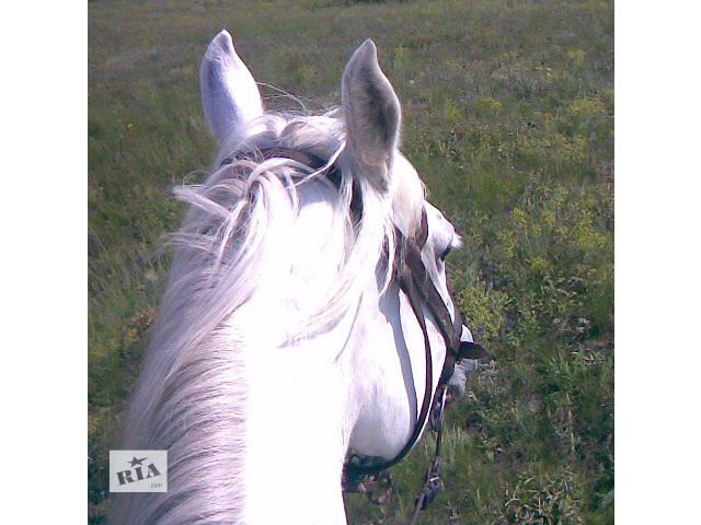 продам Обучение верховой езде. Отдых с лошадьми в живописном месте бу  в Украине