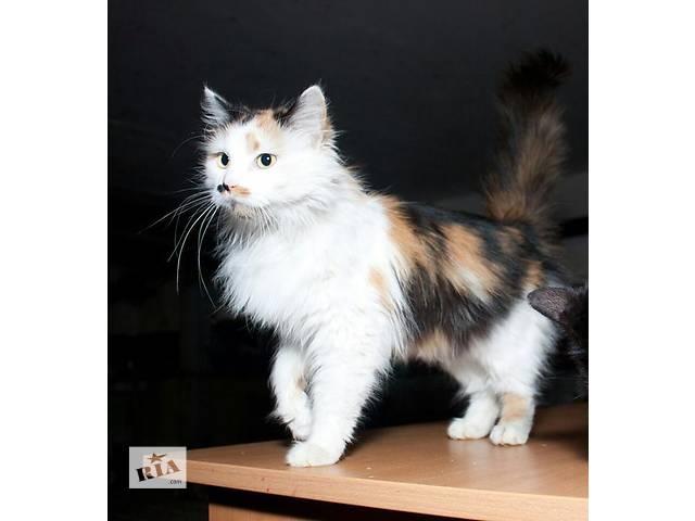 Очаровательная кошечка Сюзанна в поисках дома!- объявление о продаже  в Киеве