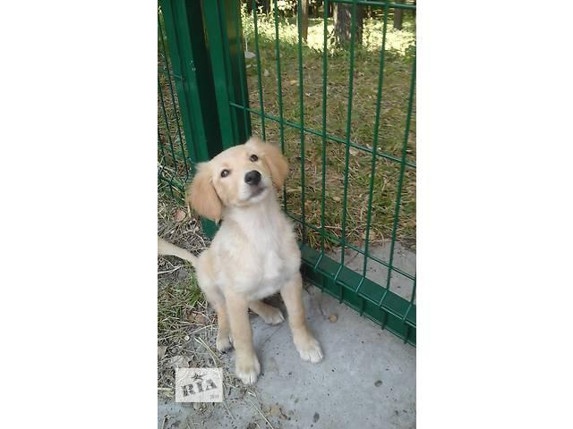 Очаровательные щенки ищут дом- объявление о продаже  в Киеве