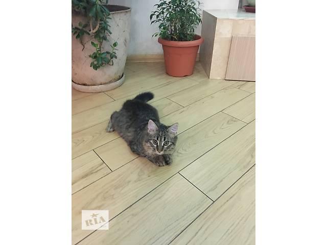 продам Очаровательный и ласковый котенок бу в Одессе