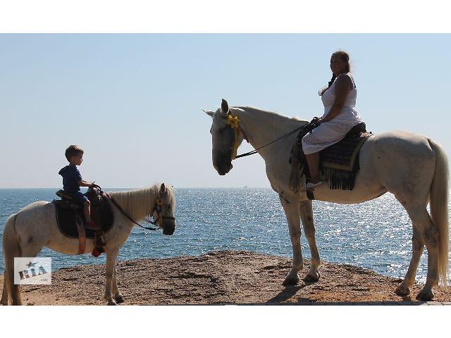 купить бу Одесса прокат лошадей и пони в Одессе