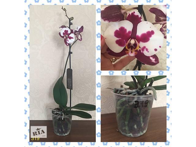 Орхидеи в наличии. Доставка по Украине- объявление о продаже  в Марганце