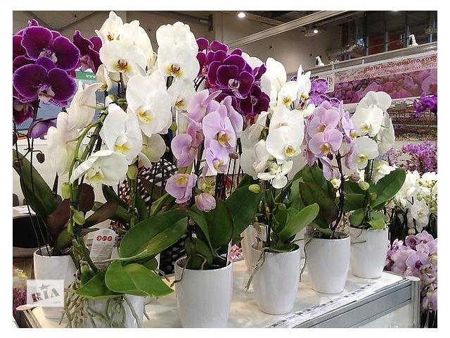 бу Орхидеи в Северодонецке
