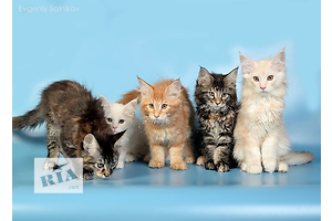 купить бу Кошки, коты, котята