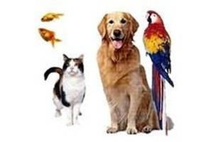 Аксессуары ювелирной работы для животных