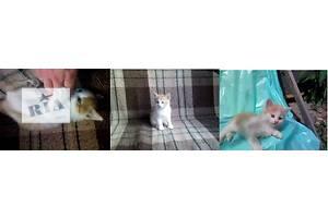 Отдадим котят / Віддамо киценят