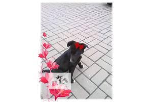 отдается черный щенок