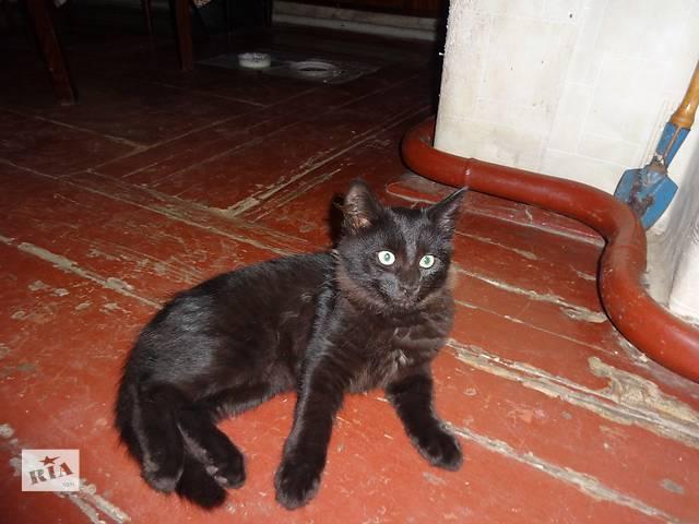отдам даром котят домашних- объявление о продаже  в Чернигове