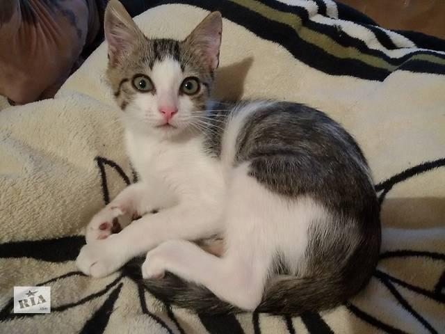 купить бу отдам котенка бесплатно в Мариуполе (Донецкой обл.)