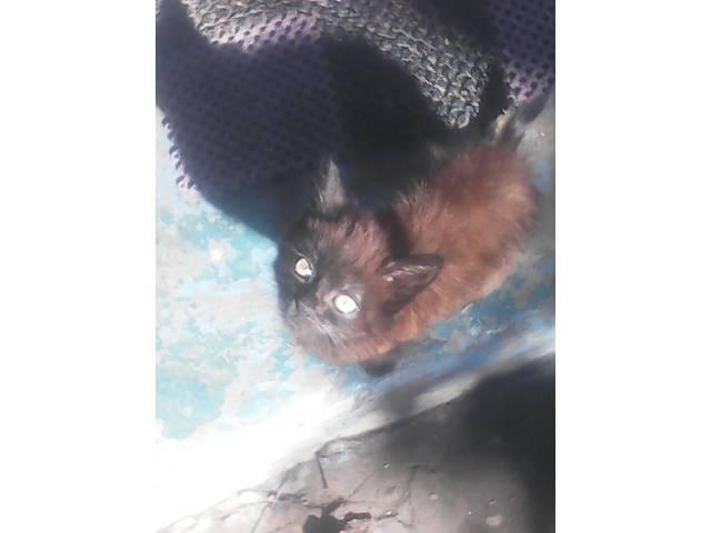 отдам котенка- объявление о продаже  в Краснограде