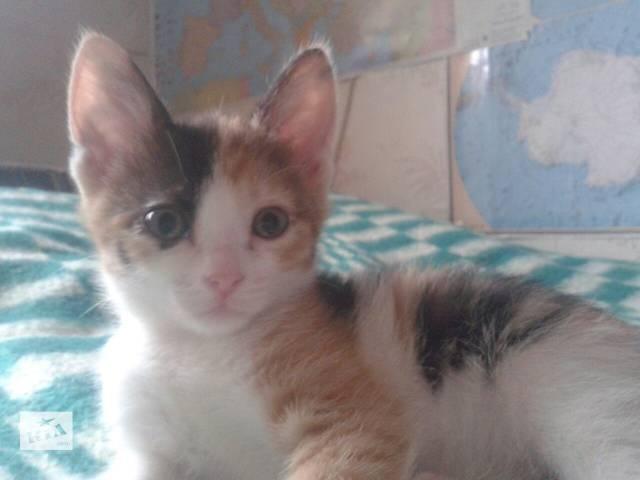бу Отдам котеночка, 2 мес в Кропивницком (Кировоград)