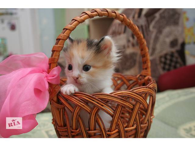 Отдам котят в добрые руки- объявление о продаже  в Харькове